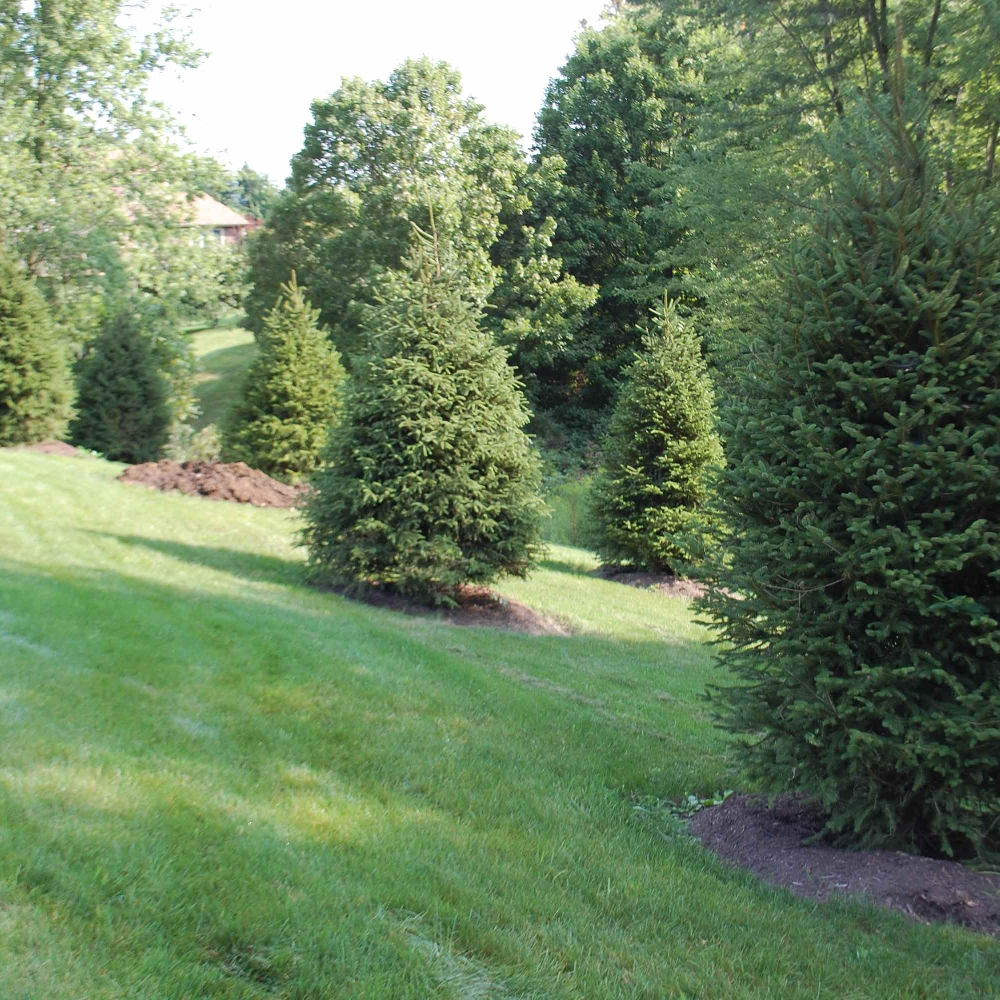 Landscaped Trees and Grass